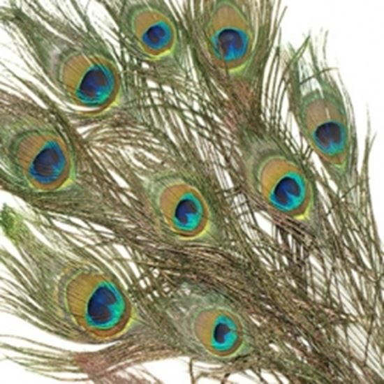 Peacock feathers craftrange buy craft supplies online for Where to buy craft feathers