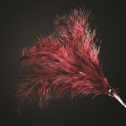 Picture of 3 Feather Spray - Burgundy