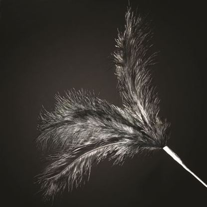 Picture of 3 Feather Spray - Black