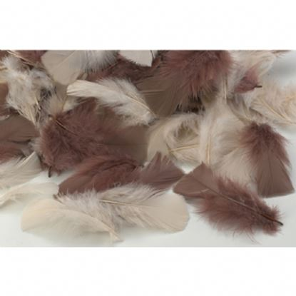 Picture of Natural Feathers