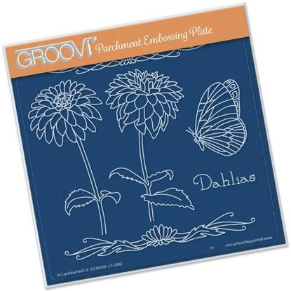 Picture of Dahlias Name Groovi A5 Plate Jayne Nestorenko