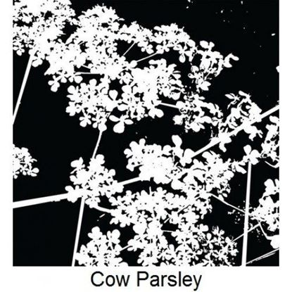 Imagination Crafts Art Stamp - Cow Parsley